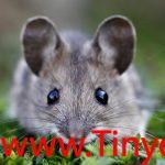 Tinycat99.onl